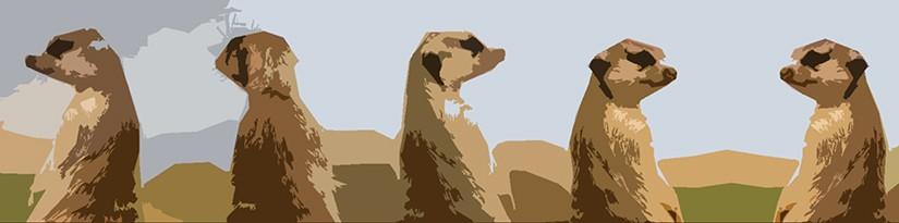 Un suricato grasso e brutto di nome Adinolfi